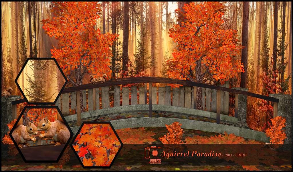 Joplino Backdrop Squirrel Paradise@La vie en pose