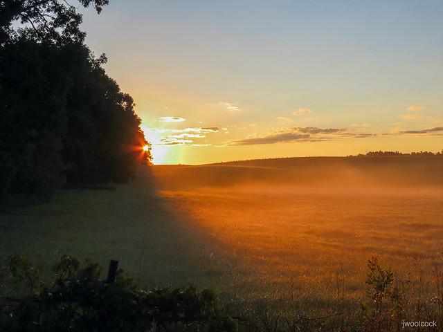 Orange Fog