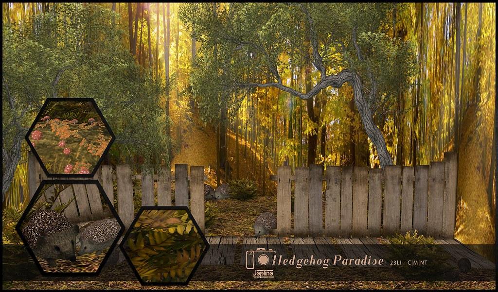 Joplino Backdrop Hedgehog Paradise @La vie en pose