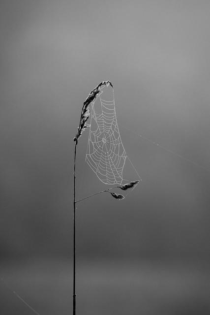 Spider net wonder