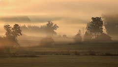 Countryside in the morning