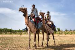 Fulani Camel Riders