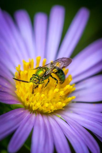 Snort More Pollen, Pollenhead