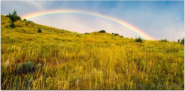 Under the Rainbow