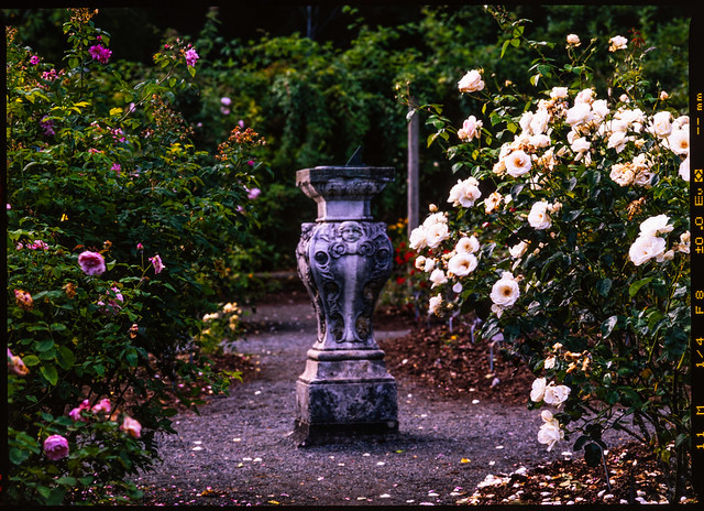 Sundial in the Rose Garden