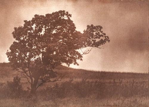 wind-blown prairie