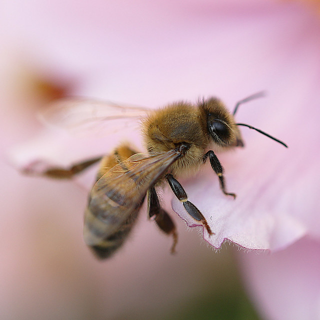 Honey Bee Ashford House 16-9-21 (7)
