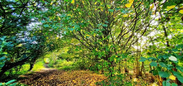 Autumn is Around the Corner.   (Mobile phone shot)