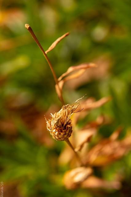 Semillas al viento