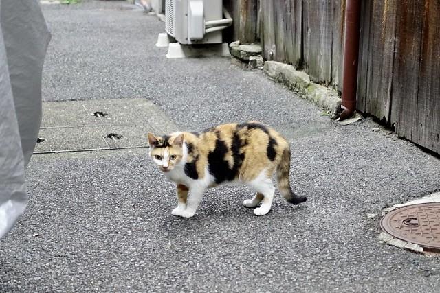 Today's Cat@2021−09−17