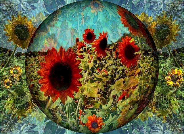 Sunflower Moment