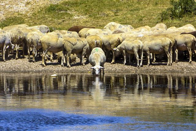 Ah perché non son io co' miei pastori?