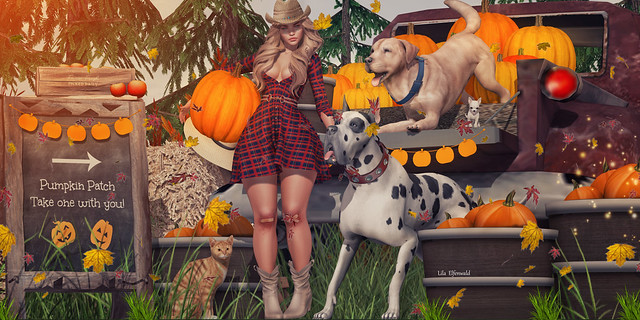 Nr2584 Country Girl In the Autumn