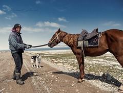 The shepherd and the horse II