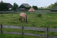 Paard - Hoeksche Waard