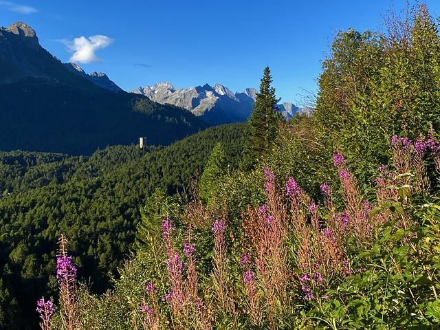 Early morning in August above Maloja, Graubünden, Switzerland