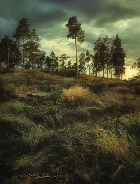On the island of Valaam.  (iPhoneX)