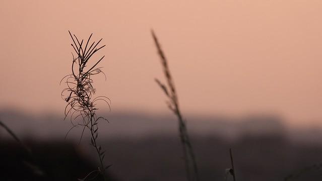 Natural Haze [Un-edited]. Sept 2021