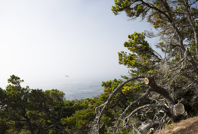 Approaching mist