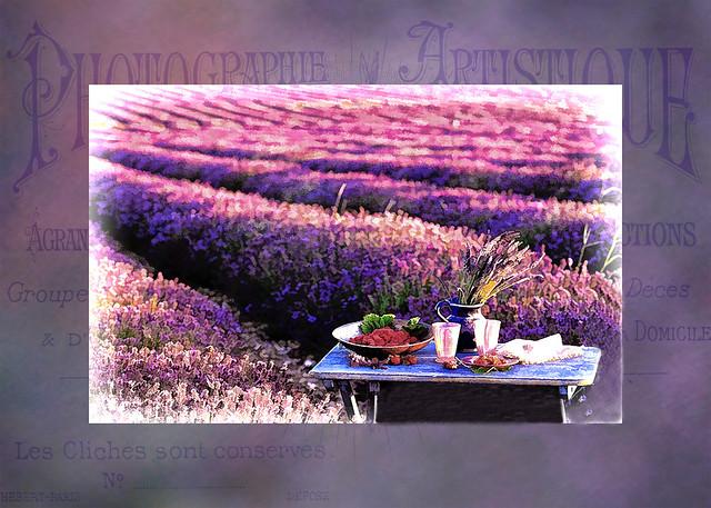 Lavender Festival Vintage Card, Niagara on the Lake, Ontario, Canada
