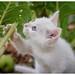 No es necesario mostrar a los gatos cómo pasar un buen rato, ya que son infaliblemente ingeniosos en ese aspecto.