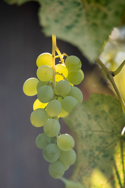 Green green grapes