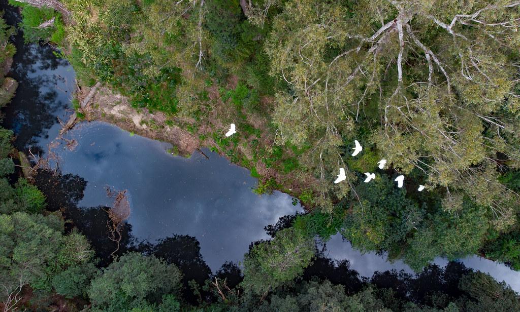 Cockies over the waterhole 2