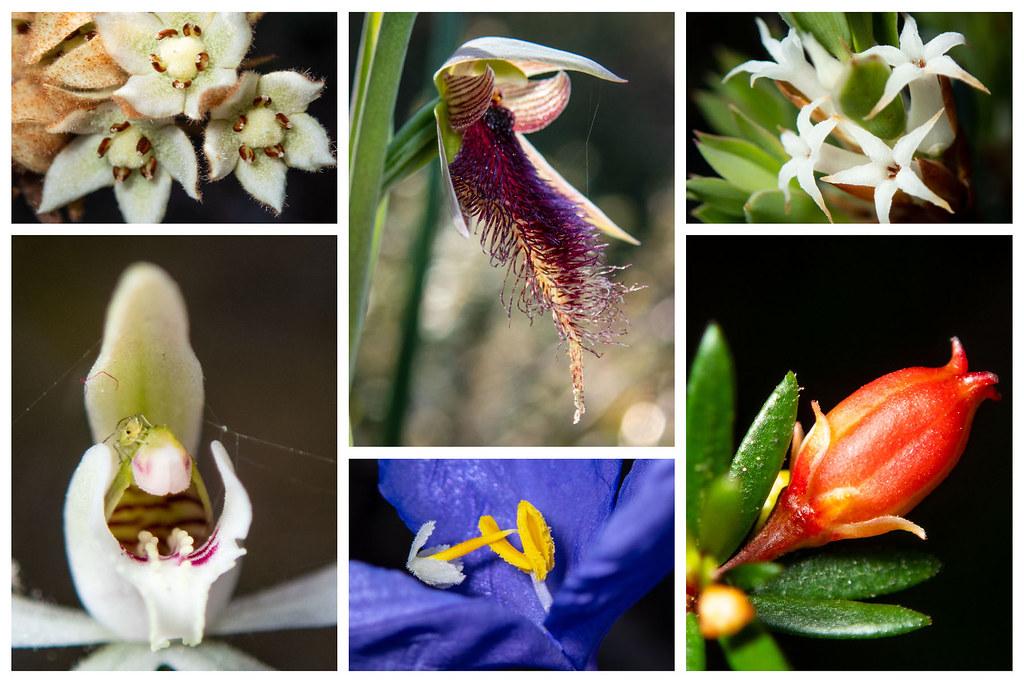 Wildflowers 15 #marineexplorer