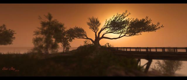 When dusk fades into night - Iona Shores