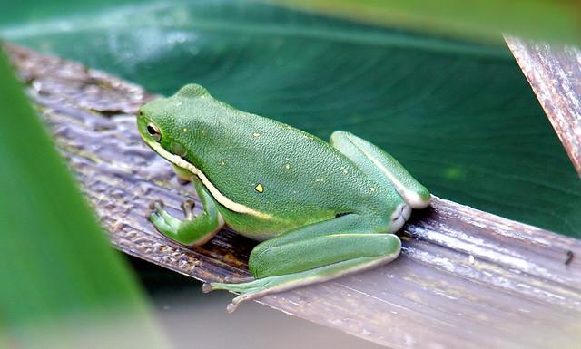 Cute Little Frog Butt