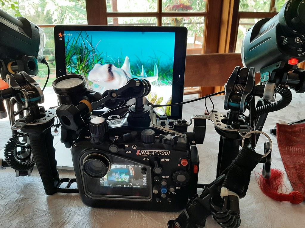 Underwater photography in lockdown