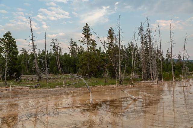 Trees at Yellowstone
