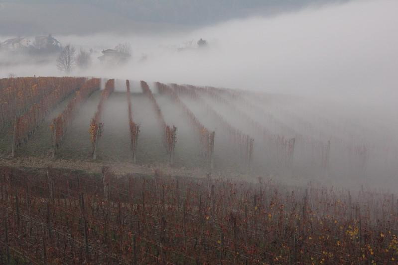 1 Posto - Fog&Vine - Fabrizio Piumatti