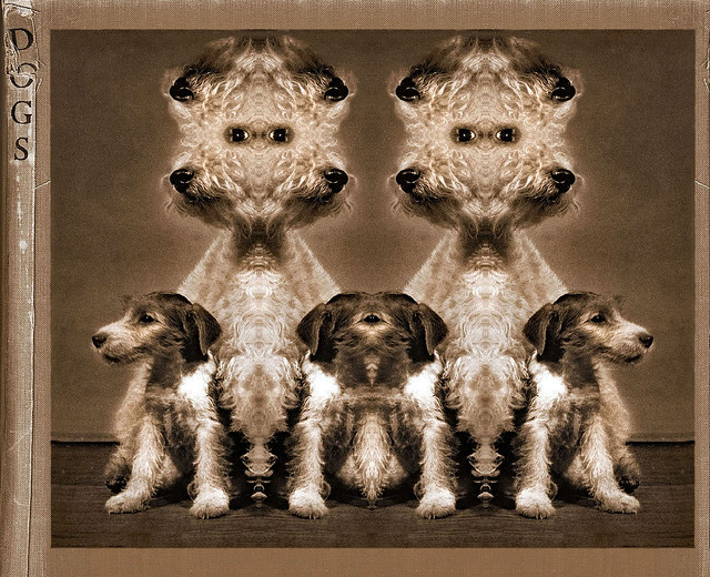 Beware Of The Dogs of Dada (redux)
