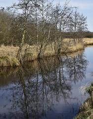 Ein Vorfluter als Erlenspiegel; Wohlde, Stapelholm (6)