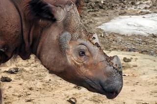 Specie in via d'estinzione, la nuova Lista Rossa IUCN