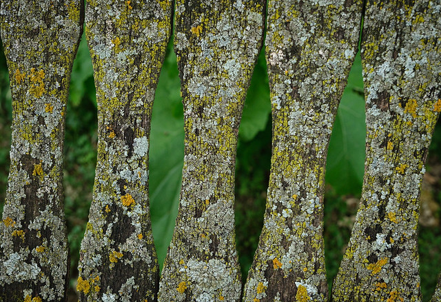 Lichens on a seat back