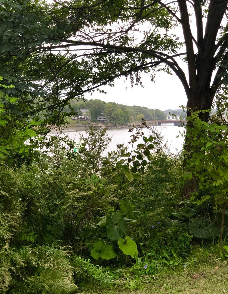 Through the Trees (Bass River from Pleasant Street Beach)