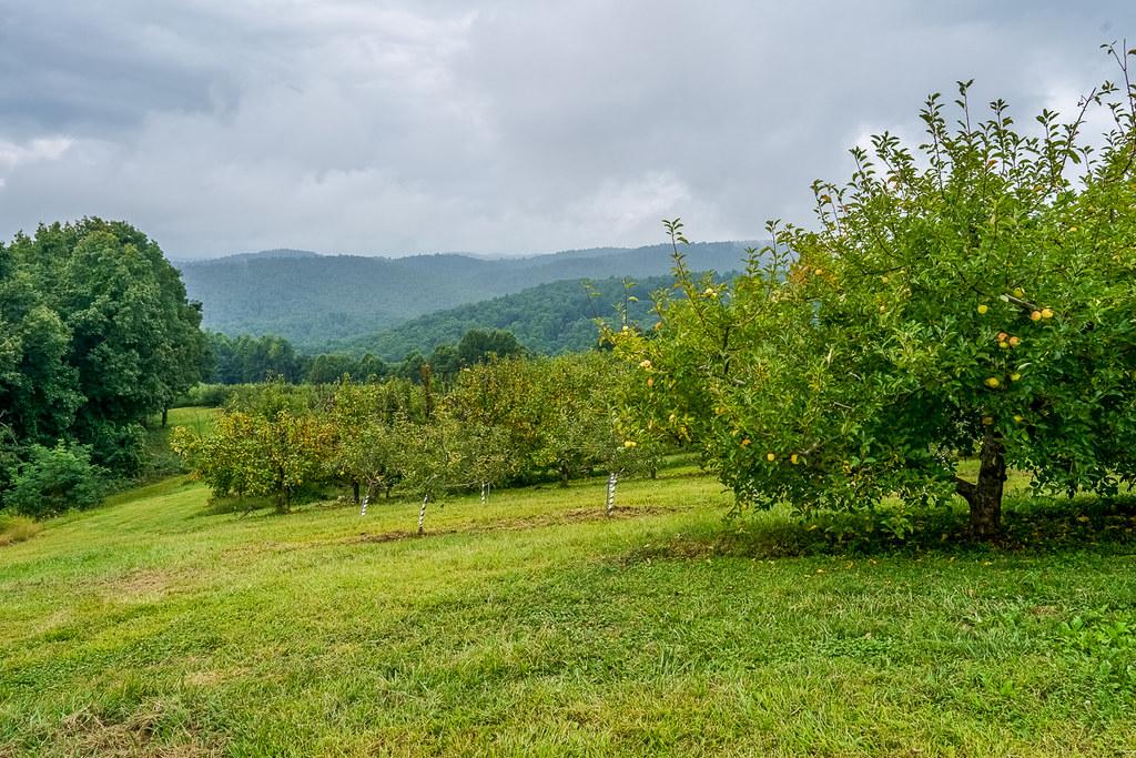 Skytop Orchard views 3
