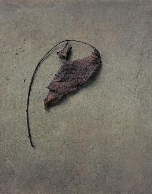 Leaf 17b