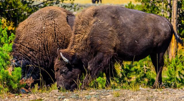 Yellowstone National, Wyoming
