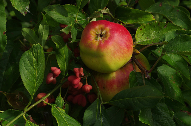 Bounty in the Kentish Hedgerows