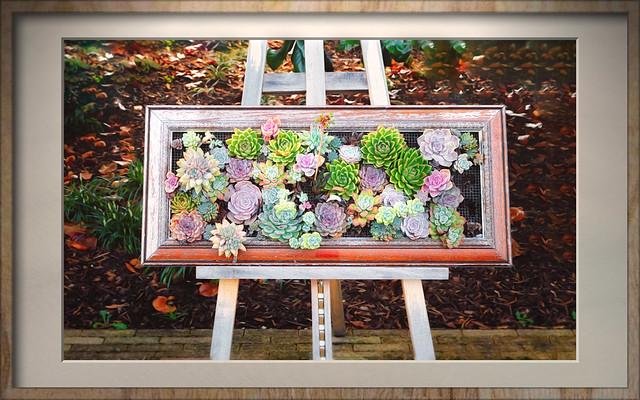Nature framed