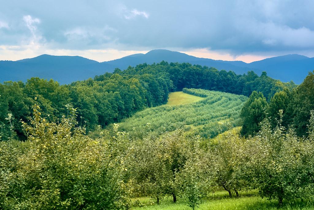 Skytop Orchard views 1