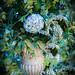 Hydrangea in an urn