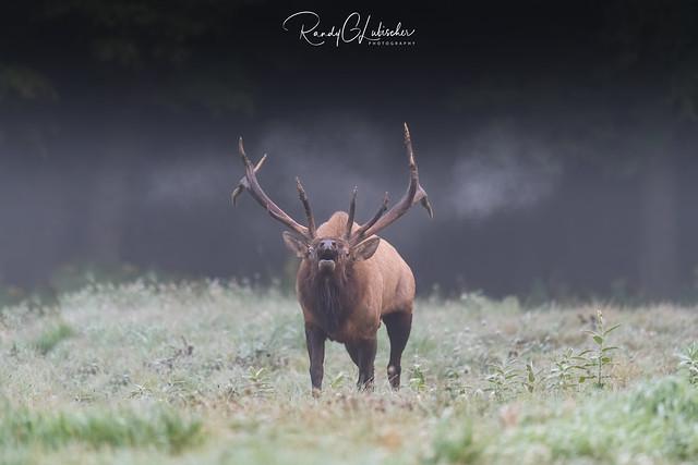 Elk of Benezette | 2020 - 43