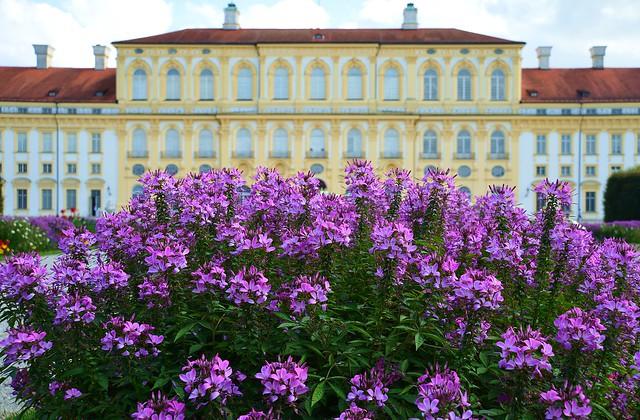 Oberschleißheim - Flowers