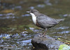 Dipper in the park.