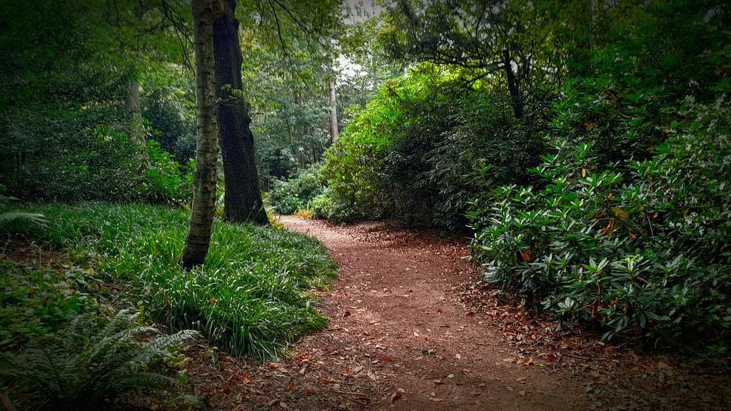 Woods @Wentworth Gardens