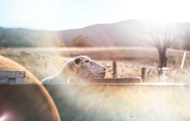 Not a selfie - a portrait of ewe